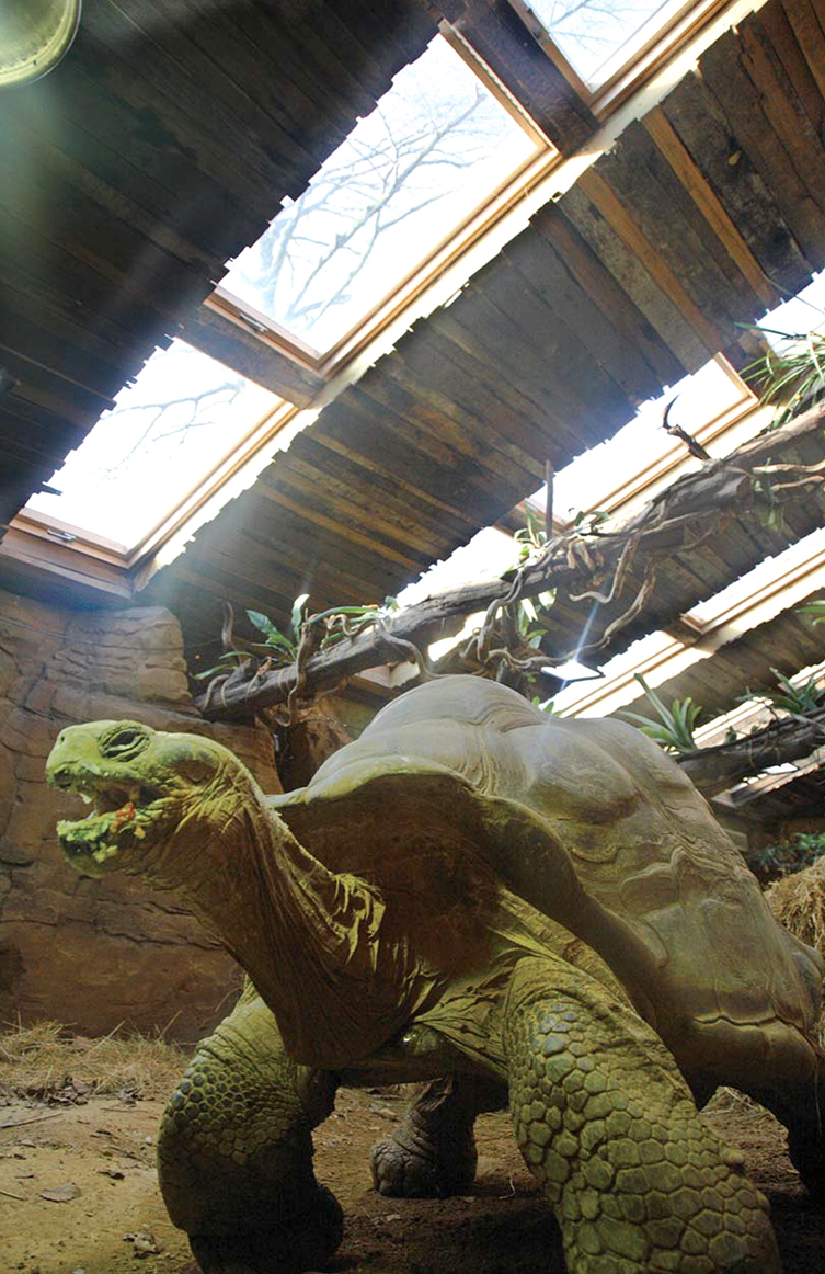 Roof Windows above Tortoise